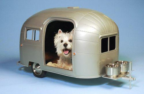 camping-car_et_chiens